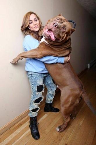En Büyük Köpek Fotoları