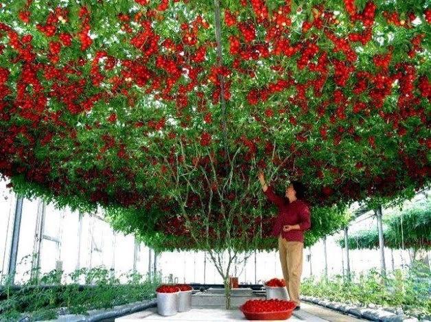 Meyve Sebze ve Doğa fotoğrafları