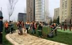 Meriç Caddesi Parkı Ağaçlandırma Çalışması