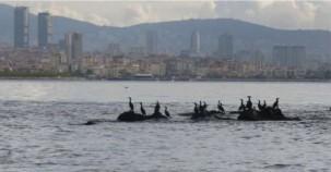 Maltepe'de Kayıp Ada Vordonisi Gün Yüzüne Çıkartılıyor