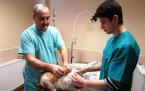 Maltepe'de Sokak Hayvanlarına Veterinerlik Hizmeti