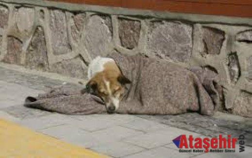 1. Sahipsiz Hayvan Rehabilitasyon Çalıştayı düzenleniyor