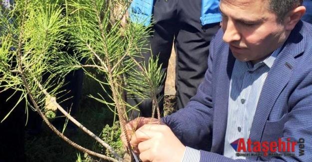 Ak Parti Ataşehir teşkilatı ağaç dikme etkinliği düzenledi