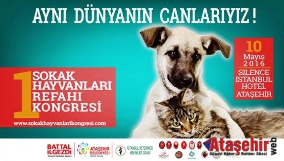 1.Sokak Hayvanları Refahı Kongresi