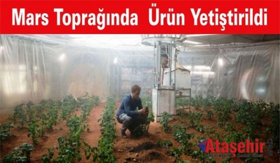 Mars toprağında yetişen ürünler sağlıklı