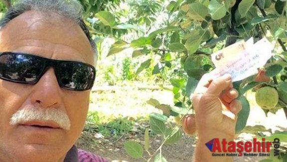 Meyve parasını ağaca astı  Helal et