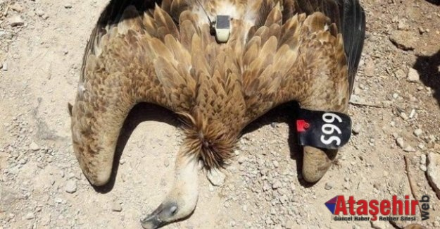 Gizemli kuş vurularak düşürüldü
