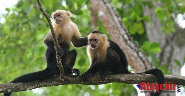 Maymun Beş Dolar