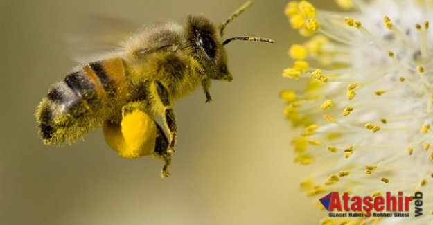 """""""Arılar Varsa Yarınlar Var"""""""