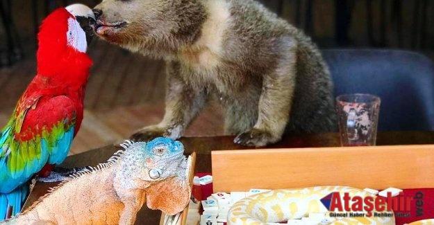 Hayvanların Dostlukları