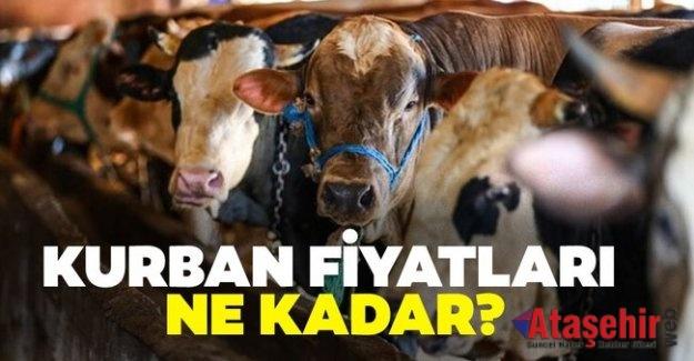 İSTANBUL'DA KURBAN FİYATLARI NE KADAR