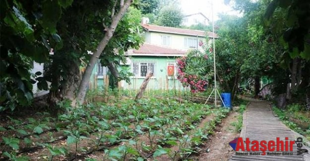 Şehir Merkezinde yerli tohumla organik tarım