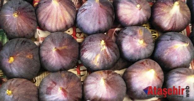 Taze Siyah incirin ihracat yolculuğu başladı