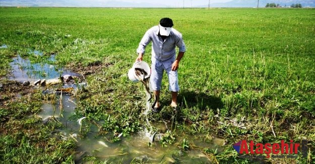 Van'da sulama kanalındaki 3 ton inci kefali kurtarıldı