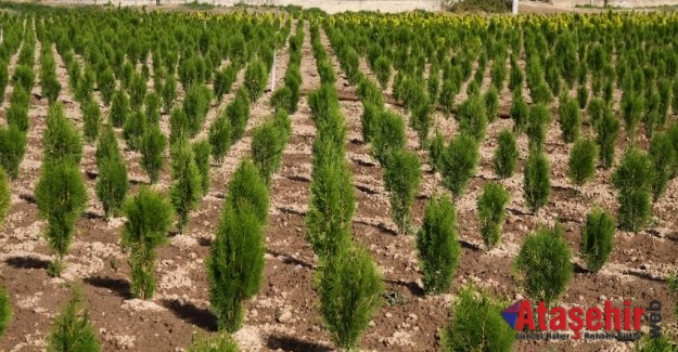 Her insan doğaya 210 ağaç borçlu