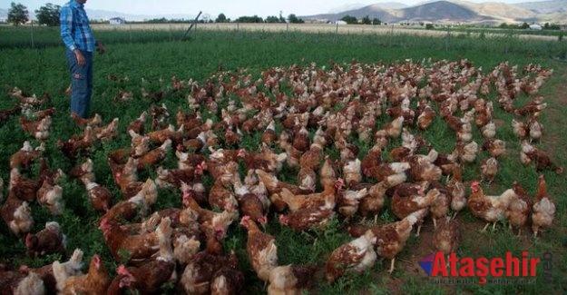 'Köy, çiftlik, doğal' yazısına güvenmiyoruz
