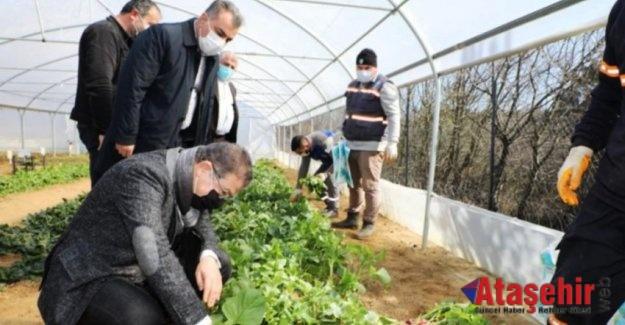 Yetişen sebzeler ihtiyaç sahiplerine ulaştırılıyor