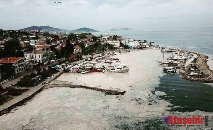 Marmara Denizi'nde deniz salyası kabusu