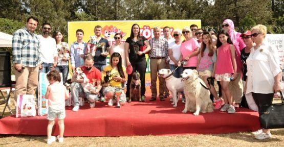 Beykoz'da En Güzel Köpekler Podyuma Çıktı