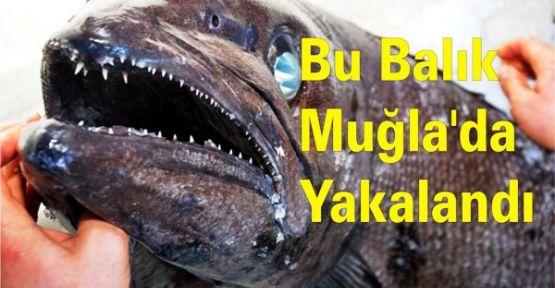 Bu Balık Muğla'da Yakalandı