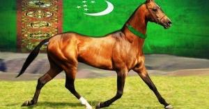 Akhal - Teke Atları, Tarihçesi ve Özellikleri