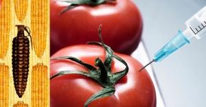 İthal tohumlar yasaklanmalı