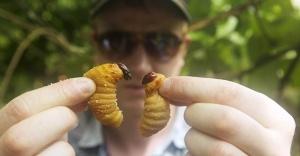 """""""Önümüzdeki 50 yıl içinde böcek yememiz gerekebilir"""""""