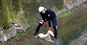 Ataşehir'de  Dereye Düşen Köpek İçin Seferber Oldular