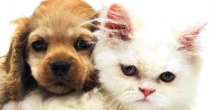 Petshoplarda hayvan satışına yasak geliyor