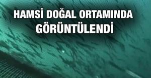 Hamsi Karadeniz'de doğal ortamında görüntülendi