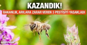 Arılara zarar veren 3 pestisit yasaklandı