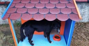 İDO terminallerine kedi ve köpek evleri