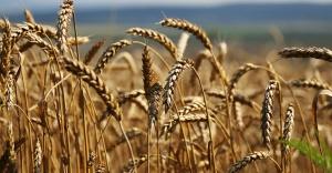 'Atatürk döneminde Türkiye, Sovyetler Birliği'nin tarımının yüzde 33'ünü karşılıyordu'