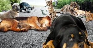 Hayvan hakları yasa teklifinde sona gelindi
