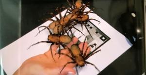 Böcek artık korkutamayacak!