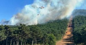 Ataşehir Kayışdağı ormanlık alanında yangın!