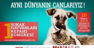 1.Sokak Hayvanları Refahı Kongresi Ataşehir'de yapılacak