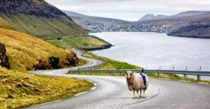 Google  koyunlarla iş birliği yapıyor