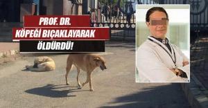 Profesör,  Köpeği bıçakladı
