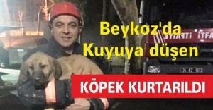 Beykoz'da kuyuya düşen köpek kurtarıldı