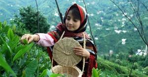 Organik çay üretimine ağırlık verilecek