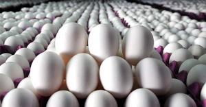 Yumurta fiyatlarında şok düşüş