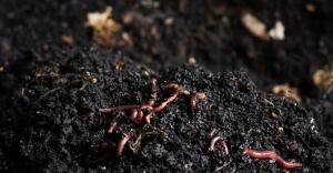 Tarıma Solucan Desteği