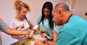 Maltepe'de 4 yılda 45 bin sokak hayvanı tedavi edildi