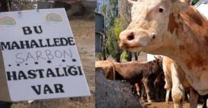 Şarbondan korunmak için etleri iyi pişirin!