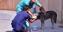 """Maltepe'de Sokak hayvanlarına """"sıcak"""" müdahale"""