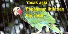 Yasak aşkı papağanın iltifatları ele verdi
