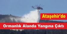 Ataşehir'de Ormanlık Alanda Yangın Çıktı