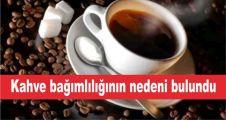 Kahve bağımlılığının nedeni bulundu