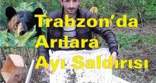Trabzon'da Arılara Ayı Saldırısı
